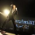 Animal-jazz-03