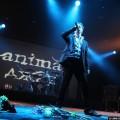 Animal-jazz-06