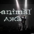 Animal-jazz-24